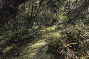 bromelia garden