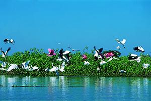 Roteiro Pantanal Sul - Caiman  - Pacote 5 Dias e 4 Noites