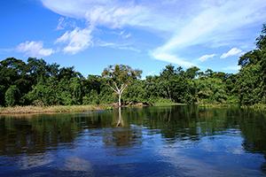 Roteiro Pantanal Sul - Caiman  - Pacote 4 Dias e 3 Noites