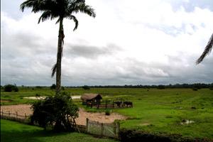 Roteiro Ilha de Marajó - Fazenda Nossa Senhora do Carmo  - 3 dias e 2 Noites
